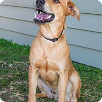 Adopt A Pet :: Freddie - Larned, KS