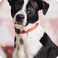 Adopt A Pet :: Pepper - Portland, OR