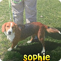 Beagle Mix Dog for adoption in Barnwell, South Carolina - Sophie