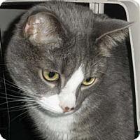 Adopt A Pet :: Norma - Verdun, QC