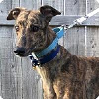 Adopt A Pet :: P'S DOTTIE - Grandville, MI