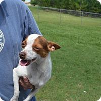 Adopt A Pet :: Tito - Tavares, FL