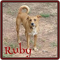 Adopt A Pet :: Ruby - Waxhaw, NC