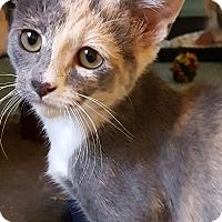 Adopt A Pet :: Olivia - Winchester, CA