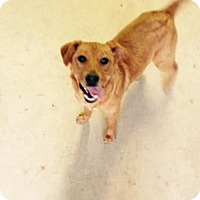 Adopt A Pet :: Annie - Smithfield, NC