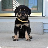 Adopt A Pet :: Winston - Minneapolis, MN