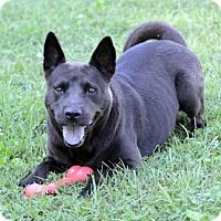Adopt A Pet :: Raven - Potomac, MD