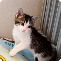 Adopt A Pet :: Yucatan - Colorado Springs, CO