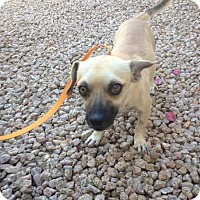 Adopt A Pet :: Scooter - Phoenix, AZ