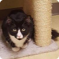 Adopt A Pet :: Nitro - Breinigsville, PA
