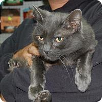 Adopt A Pet :: Zombie - Brooklyn, NY
