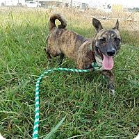Adopt A Pet :: Arya - Lebanon, TN