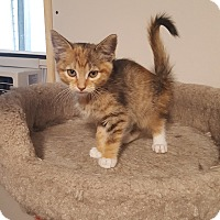 Adopt A Pet :: Harper - Wichita, KS