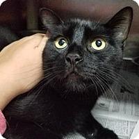 Adopt A Pet :: Eve - Douglasville, GA