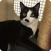 Adopt A Pet :: Geo - San Jose, CA