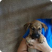 Adopt A Pet :: Tweety - Oviedo, FL