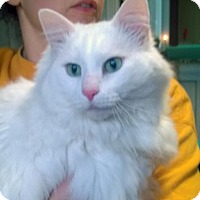 Adopt A Pet :: SNOWBALL - Terre Haute, IN