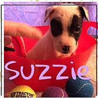 Adopt A Pet :: Suzzie - Cat Spring, TX