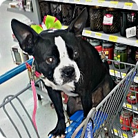 Adopt A Pet :: Princess Oreo - Greensboro, NC
