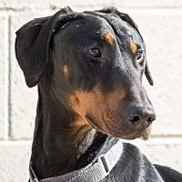 Adopt A Pet :: Magnum - Grayslake, IL