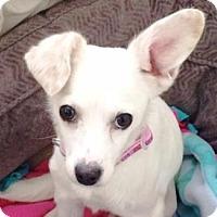 Adopt A Pet :: Babette - Castro Valley, CA
