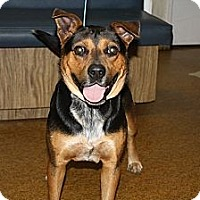 Adopt A Pet :: Wallie - Wauchula, FL