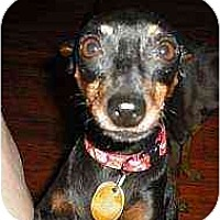 Adopt A Pet :: Lil' Bit - Nashville, TN