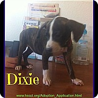 Adopt A Pet :: Dixie - Plano, TX