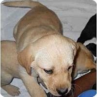 Adopt A Pet :: Holly - Cumming, GA