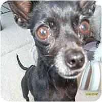 Adopt A Pet :: Jalen - Phoenix, AZ