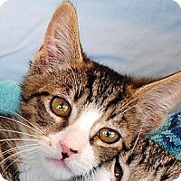Adopt A Pet :: AJ & Annie - Palmdale, CA