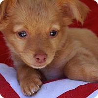 Adopt A Pet :: Kenton - La Habra Heights, CA