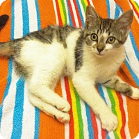 Adopt A Pet :: Sarah Jane - Riverhead, NY