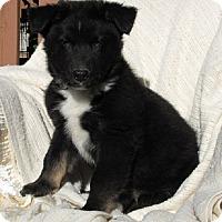 Adopt A Pet :: Jordan - Oakland, AR