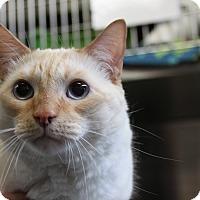 Adopt A Pet :: Pinky - Sarasota, FL
