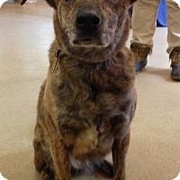 Adopt A Pet :: Lily - Rockaway, NJ