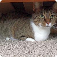 Adopt A Pet :: Lily - Nashville, TN