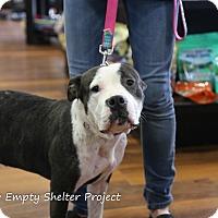 Adopt A Pet :: Jubilee - Manassas, VA