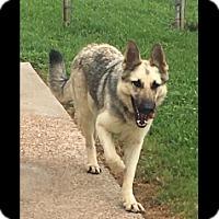Adopt A Pet :: Gia - Houston, TX