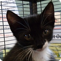 Adopt A Pet :: Jackie - Sarasota, FL