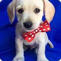 Adopt A Pet :: Danielle - Irvine, CA