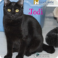 Domestic Shorthair Kitten for adoption in Covington, Louisiana - Jodi