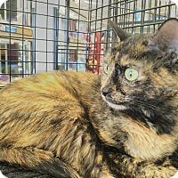 Adopt A Pet :: Sapphire - Stafford, VA