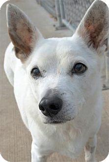 Terrier (Unknown Type, Medium) Mix Dog for adoption in Waupaca, Wisconsin - Ozwald