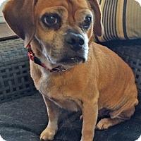 Adopt A Pet :: Flip - Mt. Prospect, IL
