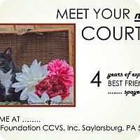 Adopt A Pet :: Courtney - Saylorsburg, PA