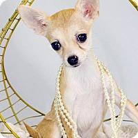 Adopt A Pet :: Elara - St. Louis Park, MN
