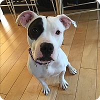 Adopt A Pet :: Emily - Cherry Hill, NJ
