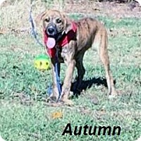 Adopt A Pet :: Autumn 1 in CT - Manchester, CT