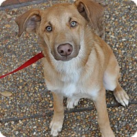 Adopt A Pet :: Hunter - Atlanta, GA